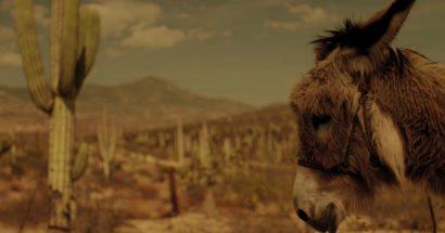 Expedia – Camel
